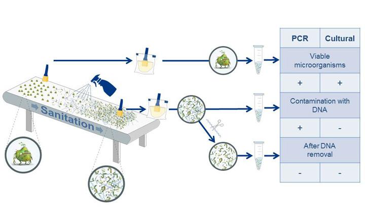 PR<em>Eraser</em> BAC<em>Gene</em>: Reliable PCR Results by Elimination of Free DNA