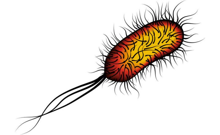 Challenges in the Detection of <em>E. coli </em>O103