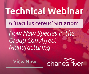 How new species in the Bacillus cereus group can affect manufacturing