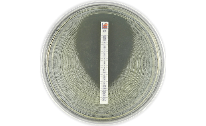 Liofilchem MIC Test Strip (MTS™) Clindamycin (CD)