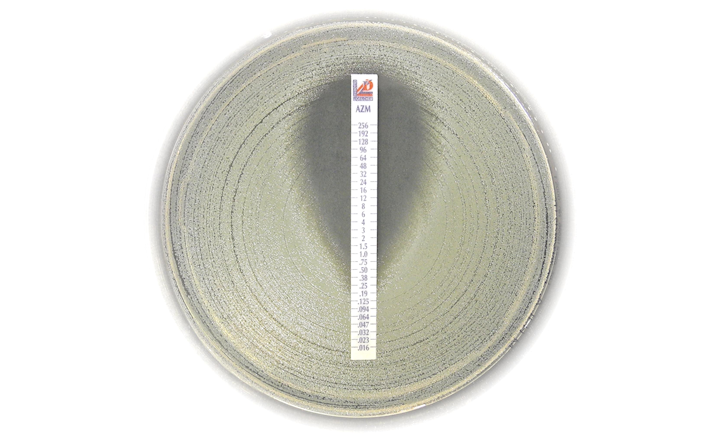 Azithromycin MIC strip