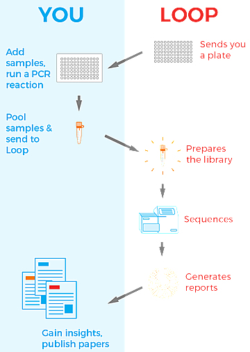 1946_LoopGenomics_Workflow