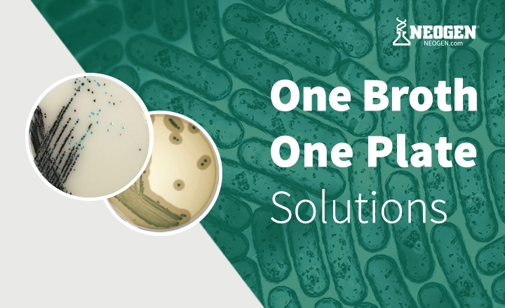 rapidmicrobiology NEOGEN<sup>&reg;</sup>&rsquo;s One Broth One Plate (OBOP)  Solutions - Now Available for <em>Salmonella</em>