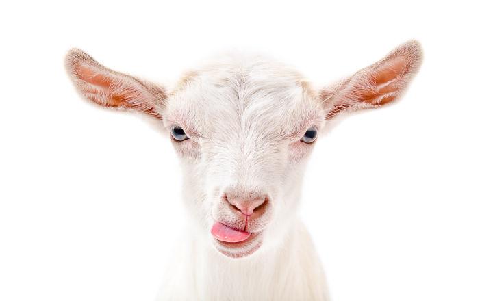 rapidmicrobiology Unique ATP Bioluminescence Rapid Testing of Goat