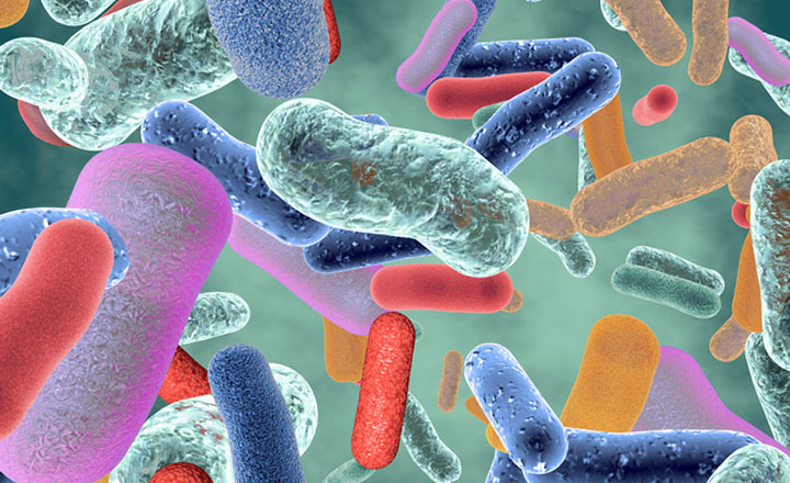 Best Detection Method for Salmonella in Foods