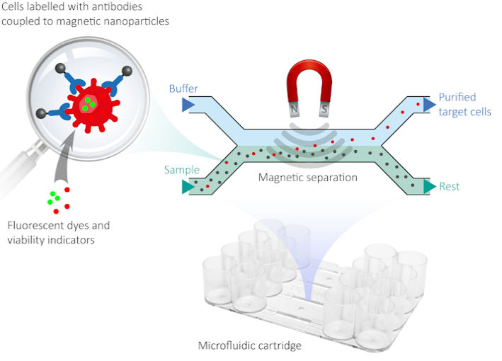 Legionella detection using magnetic separation of cells