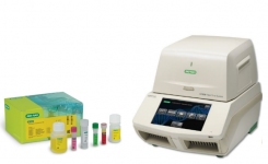 E. coli STEC VirX and SerO real-time PCR