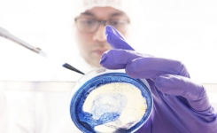 Microbiologist working in cleanroom