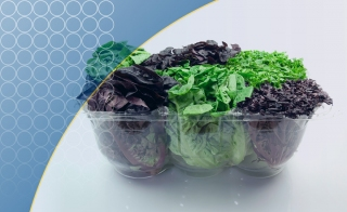 Microbial Contamination: Are Pre-Packaged Salads A Health Risk?