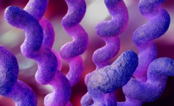 how to test for campylobacter in foods