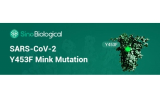Recombinant Version of Mink Strain Spike-Protein Available
