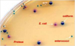 New Thermo Scientific Clarity Agar Improves Differentiation of UTI Pathogens